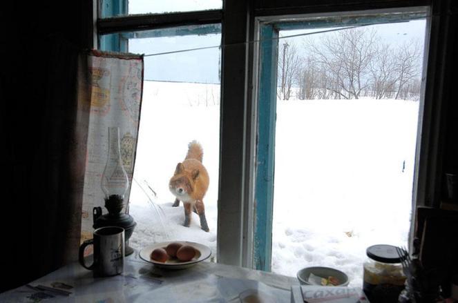 amazing-fox-photos-14